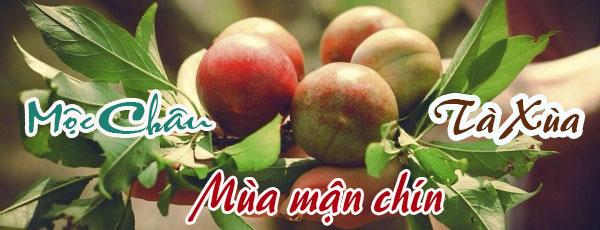 moc-chau-di-dau-cho-xung-vietmountain-travel17