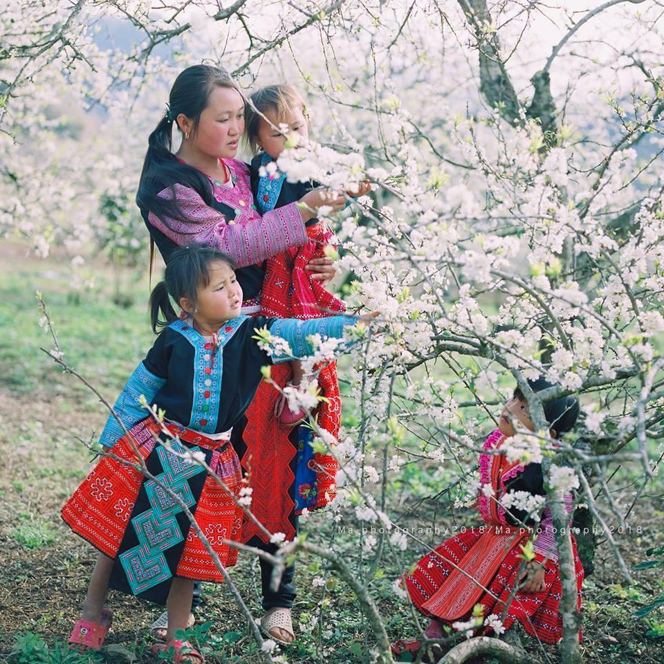 Du lịch Mộc Châu- Tà Xùa mùa xuân có gì hấp dẫn? - Vietmountain Travel 4