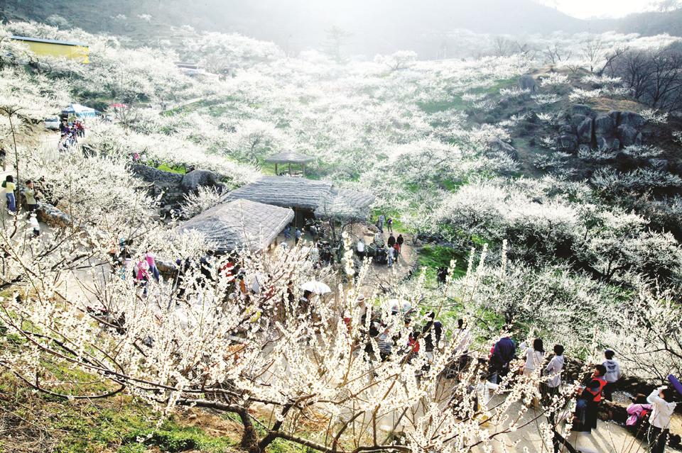 Du lịch SaPa mùa xuân có gì hấp dẫn? - Vietmountain Travel 4