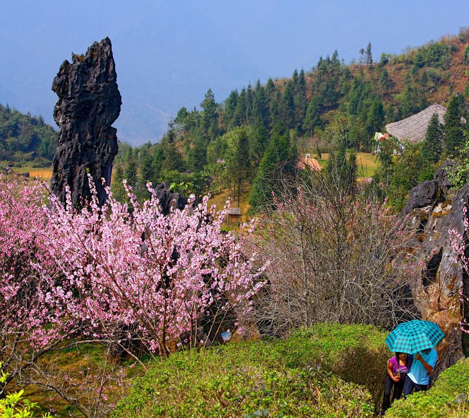 Du lịch SaPa mùa xuân có gì hấp dẫn? - Vietmountain Travel 5