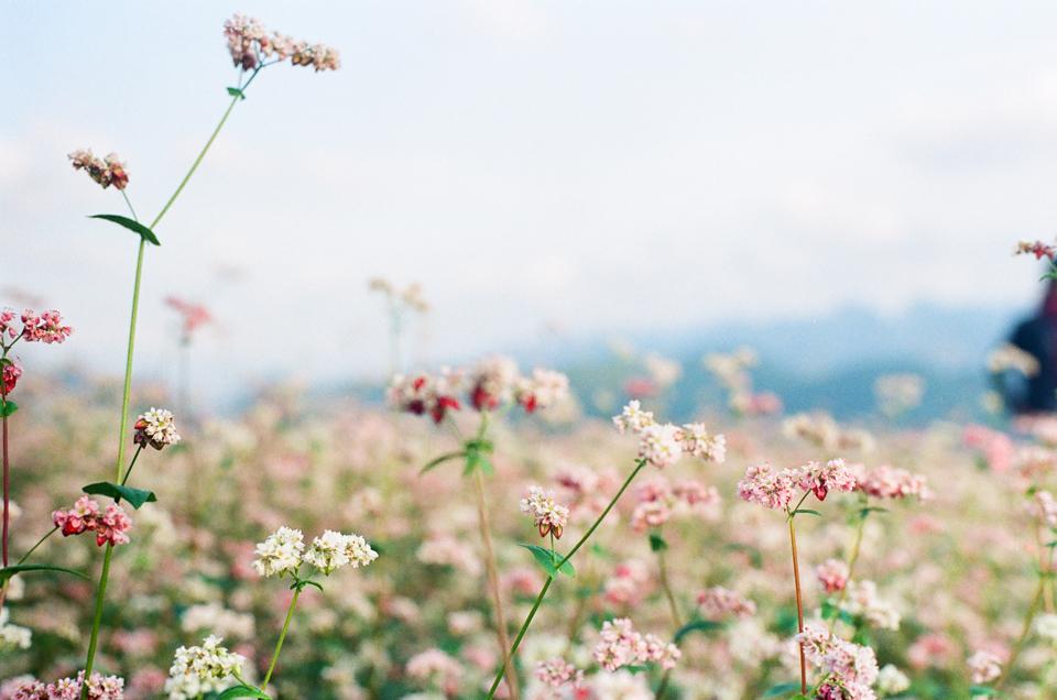 Hà Giang Tháng 10 - Chiêm Ngưỡng Vẻ Đẹp Như Trong Tranh 2