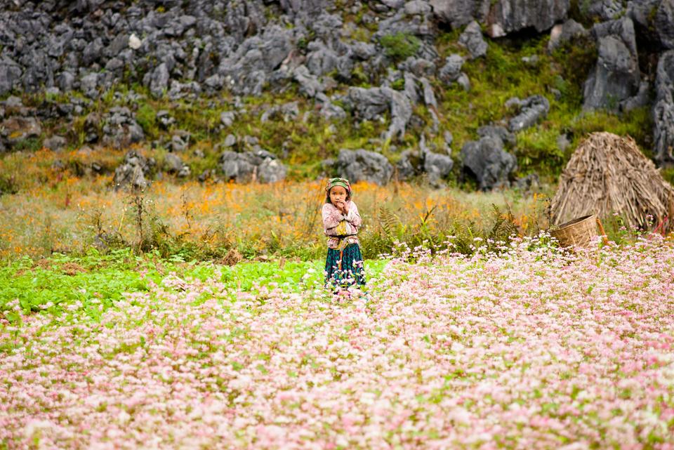 Hà Giang Tháng 10 - Chiêm Ngưỡng Vẻ Đẹp Như Trong Tranh 4