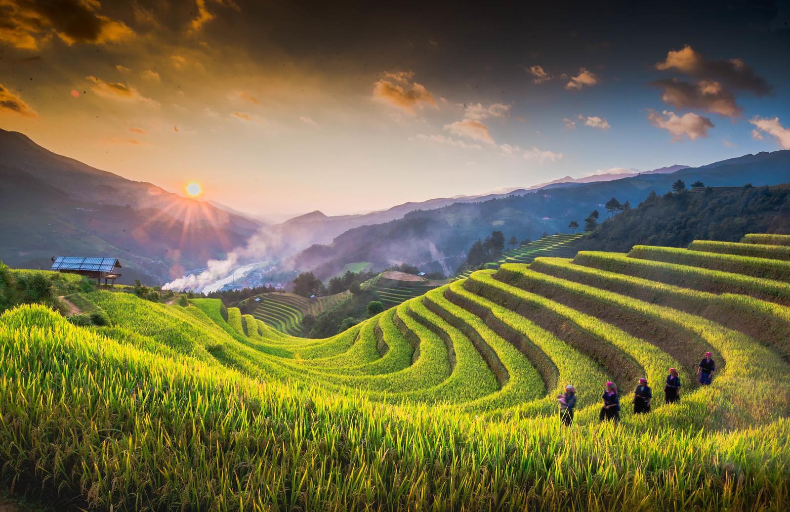 Thang-9-lua-vang-ong-phu-kin-mu-cang-chai-vietmountain-travel