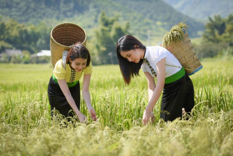 Ngot-ngao-huong-com-tu-le-noi-reo-cao-tay-bac-vietmountaintravel2