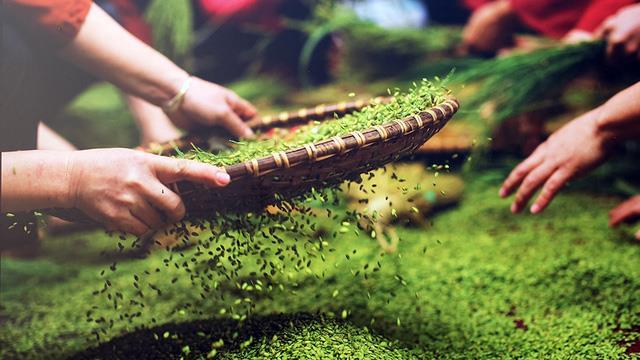 Ngot-ngao-huong-com-tu-le-noi-reo-cao-tay-bac-vietmountaintravel3