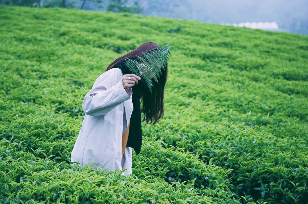 long-coc-doi-che-tien-canh-giua-vung-dat-to-vietmountain-travel4