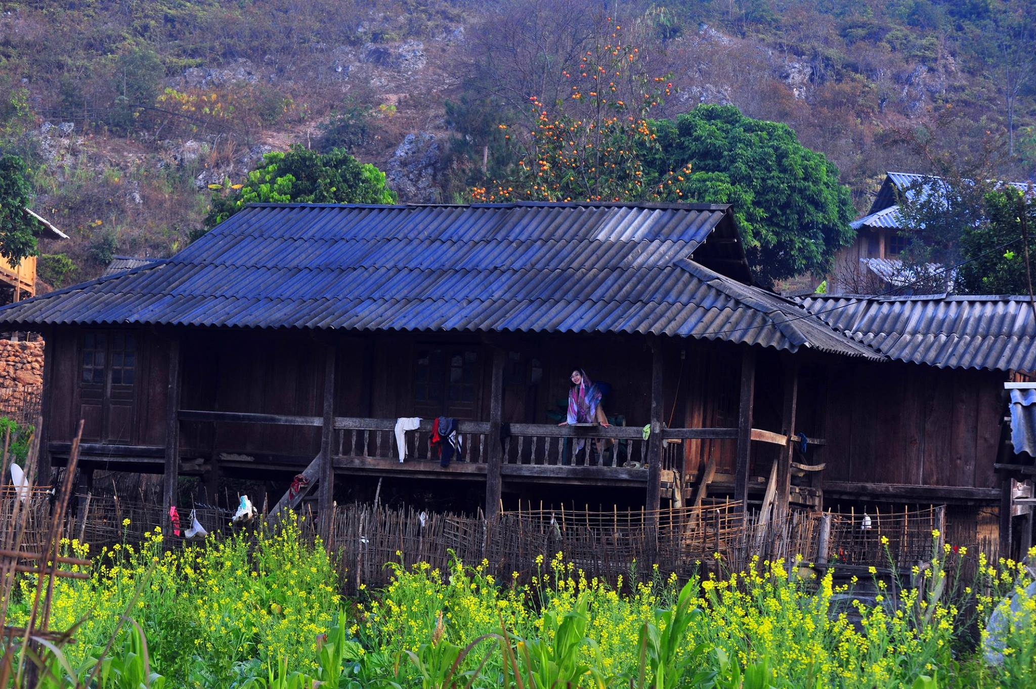 mu-cang-chai-mua-nuoc-do-vietmountain-travel2