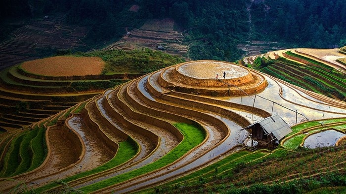 tour-mu-cang-chai-ngoc-chien-sapa-mua-nuoc-do-vietmountain-travel1