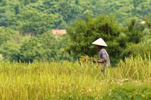 Tour Du Lịch Pù Luông 2 Ngày 1 Đêm Giá Rẻ Dịp lễ 30 Tháng 4 - Vietmountain Travel 2