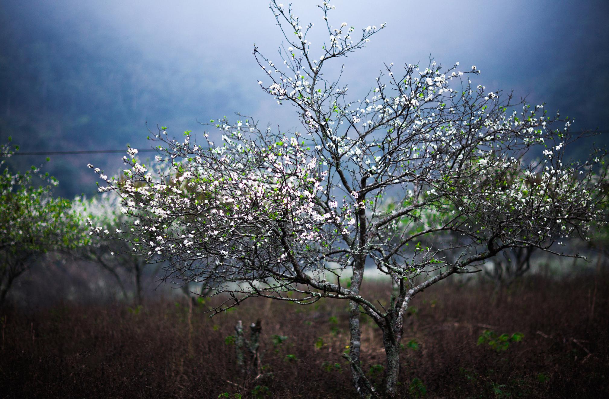 Top-3-diem-du-lich-nui-hot-nhat-trong-dip-tet-nguyen-dan-2020-vietmountain-travel2