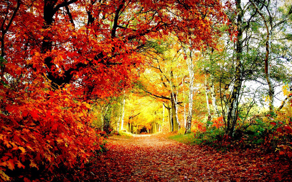 Ngỡ ngàng vẻ đẹp Hàn Quốc vào mùa thu lá đó 2