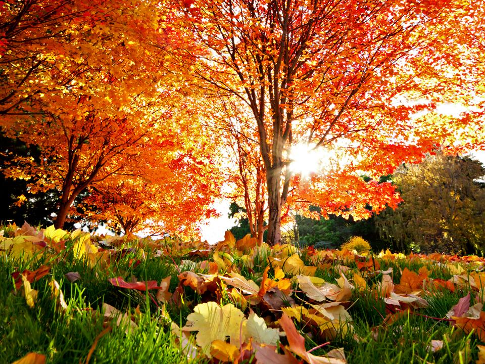 Ngỡ ngàng vẻ đẹp Hàn Quốc vào mùa thu lá đó 3