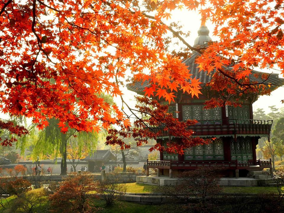 Ngỡ ngàng vẻ đẹp Hàn Quốc vào mùa thu lá đó 4