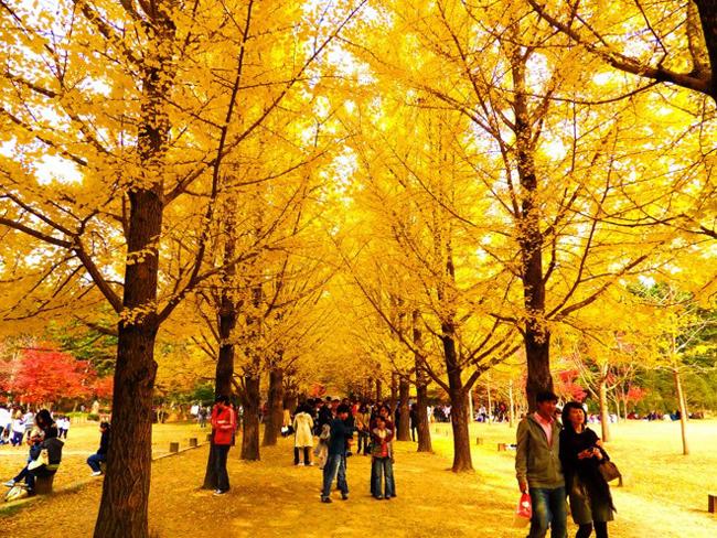Du Lịch Hàn Quốc Mùa Thu Lá Đỏ 5 Ngày 4 Đêm 8