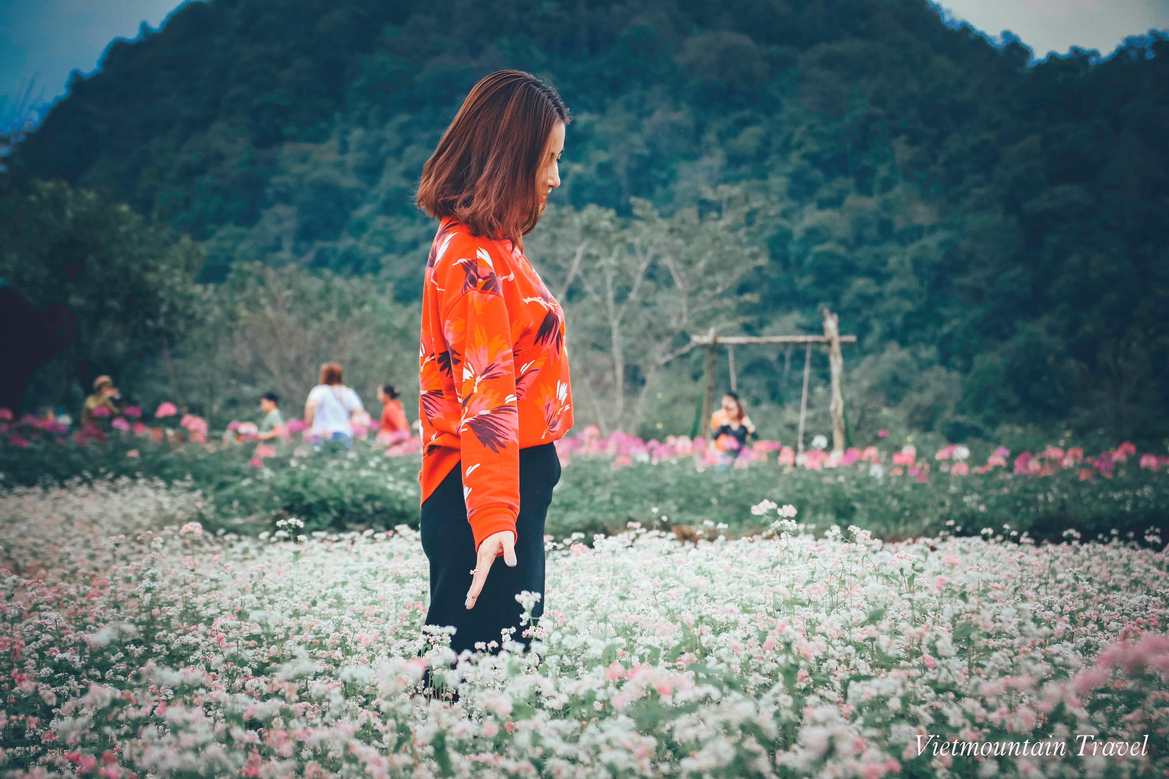 Thoi-gian-ly-tuong-de-len-ha-giang-ngam-hoa-tam-giac-mach-du-lich-nui-viet-vietmountain-travel109