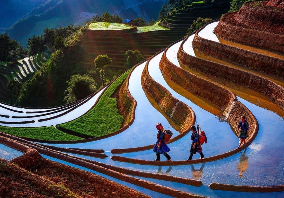 Mu-cang-chai-du-lich-mua-nuoc-do-nam-2020-duoc-to-chuc-vao-30-thang-5-vietmountain-travel1