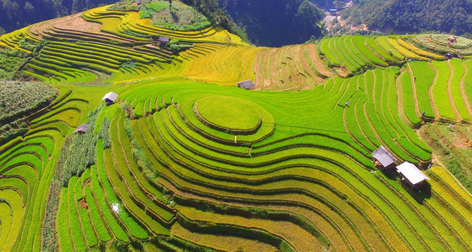 le-hoi-ruong-bac-thang-mu-cang-chai-2020-vietmountain-travel (2)