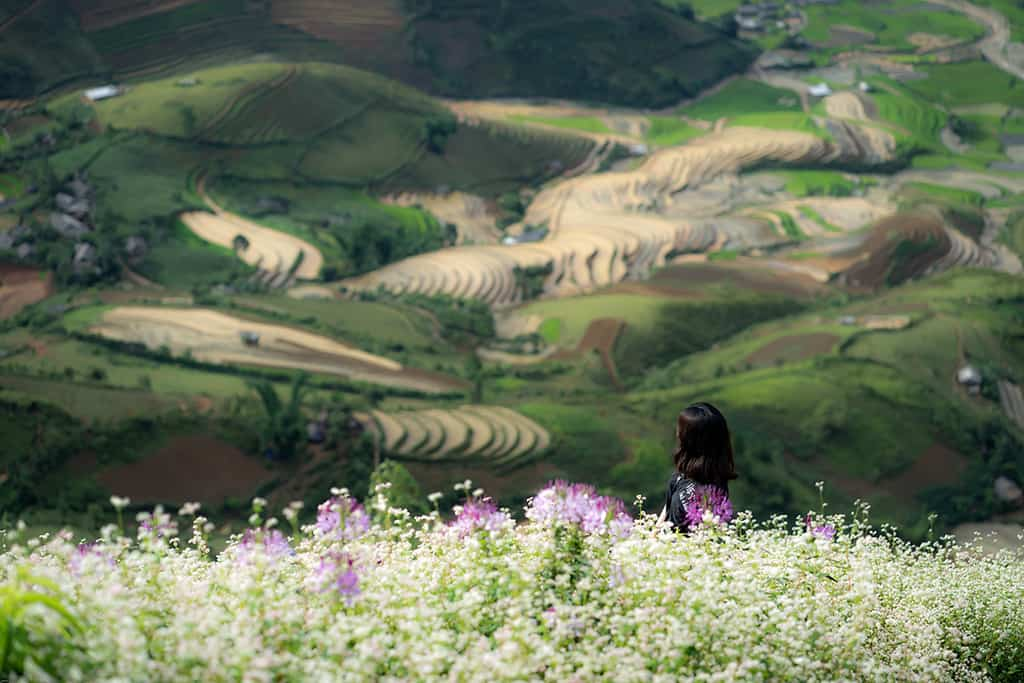 mu-cang-chai-mua-nuoc-do-vietmountain-travel1