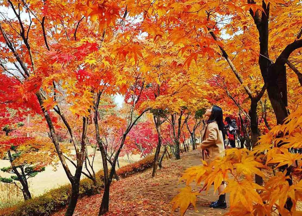 Ngỡ ngàng vẻ đẹp Hàn Quốc vào mùa thu lá đó 1