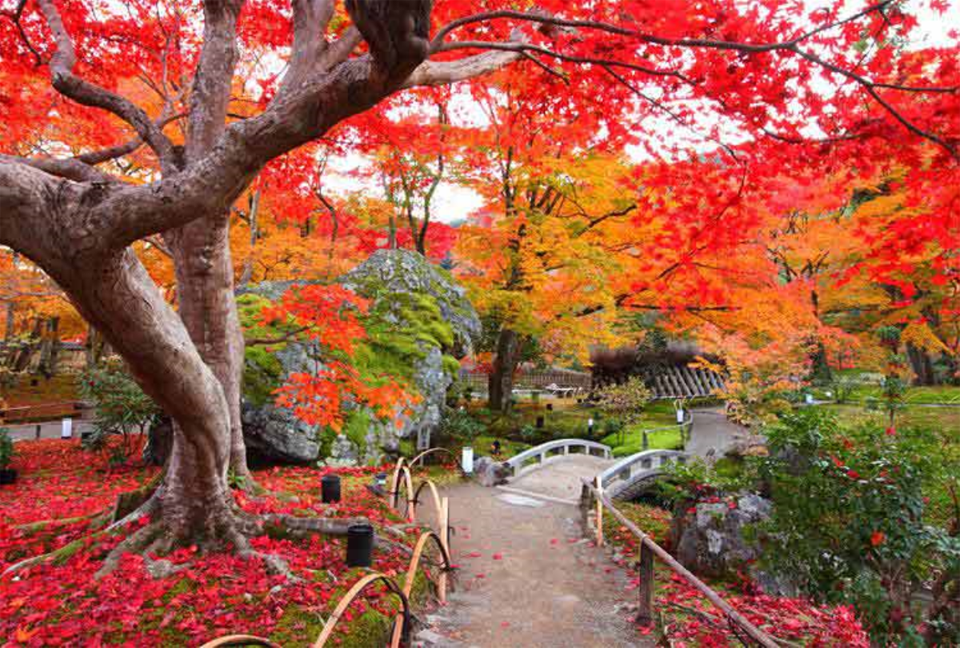 Ngỡ ngàng vẻ đẹp Hàn Quốc vào mùa thu lá đó 5