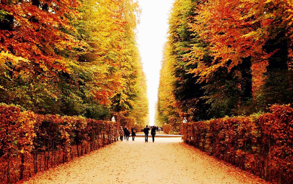 Ngỡ ngàng vẻ đẹp Hàn Quốc vào mùa thu lá đó 6
