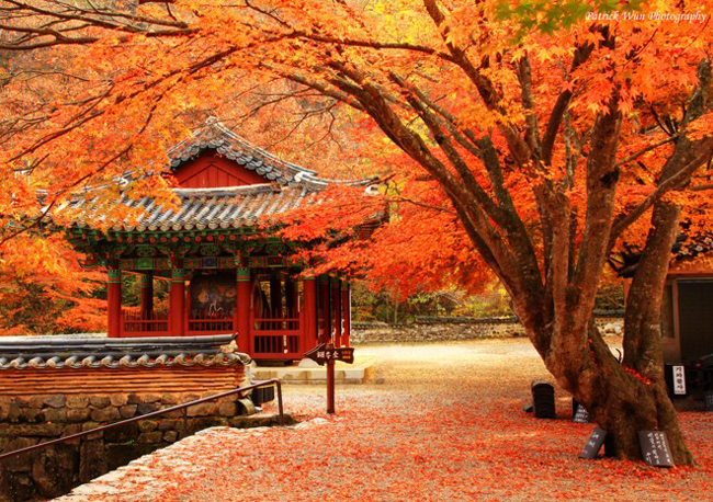 Du Lịch Hàn Quốc Mùa Thu Lá Đỏ 5 Ngày 4 Đêm 7