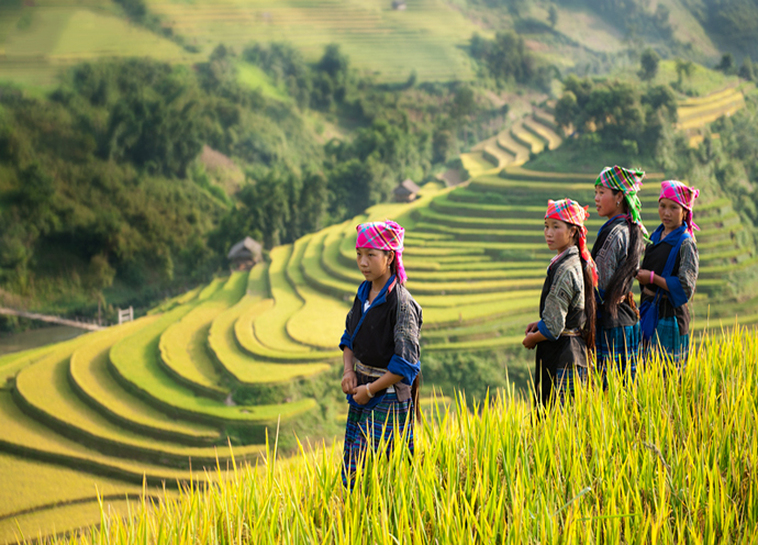 tour-mu-cang-chai-sapa-mua-lua-chin-vietmountain-travel